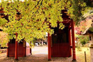 黄葉の小松寺山門