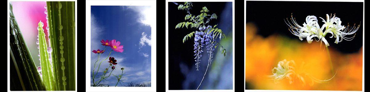 第42回千葉県民写真展の結果発表。花の部です。画像をクリックで詳細ページへ