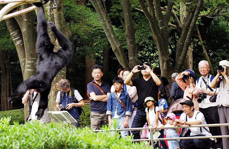 手長猿の撮影