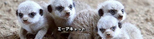 2017-06 千葉市動物公園アイキャッチ