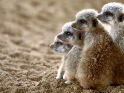 第21回「千葉市動物公園の四季写真コンテスト」写真コンテスト結果発表