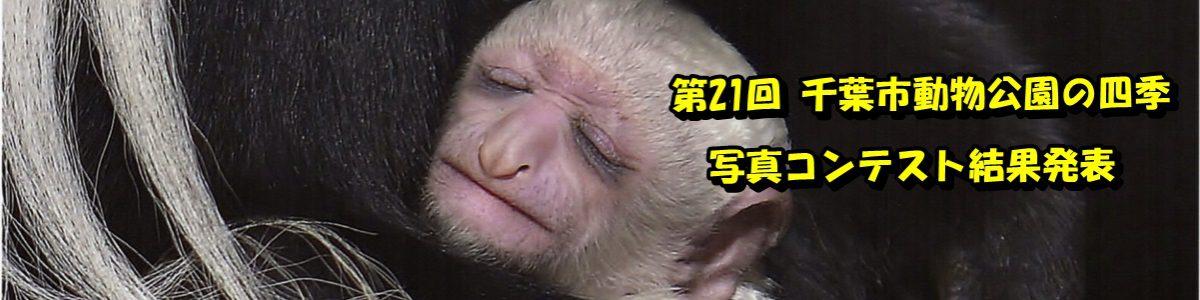 第21回 千葉市動物公園の四季写真コンテストの結果発表です。詳細は画像をクリックしてご覧下さい。