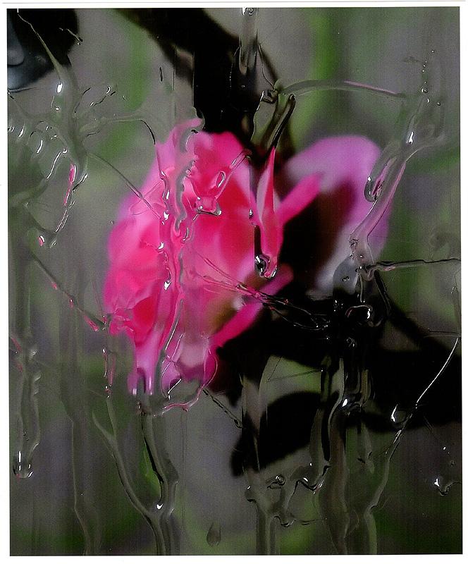 全日本写真連盟賞 雨窓に咲く 加藤 勝臣