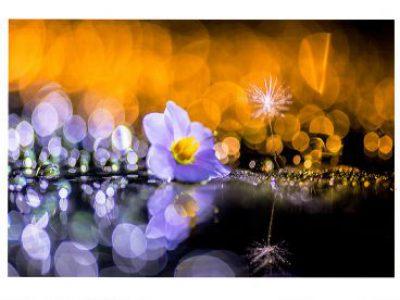 【入賞者発表】第43回千葉県民写真展「花の部」