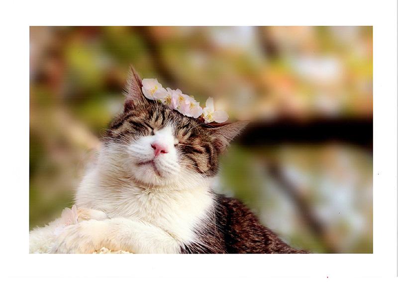 優秀賞1 うたた猫 西山葵