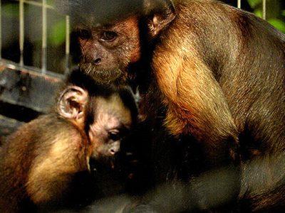 第22回 千葉市動物公園の四季写真コンテスト結果発表