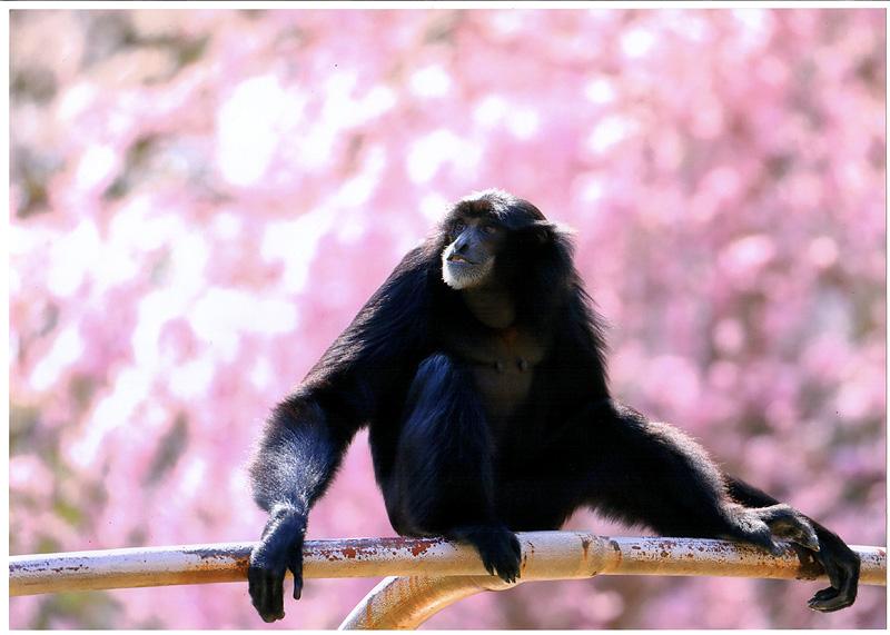 動物公園の四季 春賞「春風を感じて」 小林 裕之(三郷市)