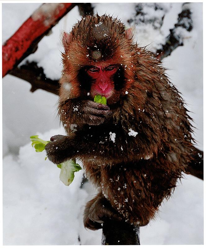 動物公園の四季 冬賞「大雪に耐える」 吉田 充輝(流山市)