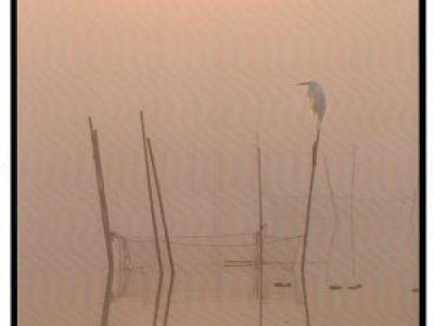 【入賞者発表】第44回千葉県民写真展「ネーチャーの部」