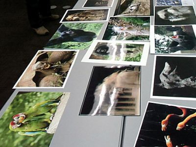 第23回 「千葉市動物公園の四季」写真コンテストの入賞作品審査会