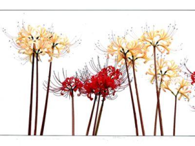 【入賞者発表】第45回千葉県民写真展「花の部」