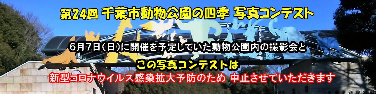<5枚の手動スライド ショー >第24回 千葉市動物公園の四季 写真コンテストは中止となりました